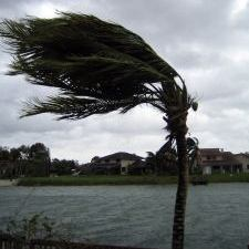 Palm Tree Hurricane Weather