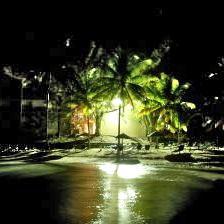 Palm tree night