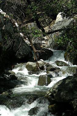 Yosemite stream