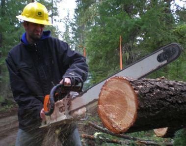 Logging in Oregon