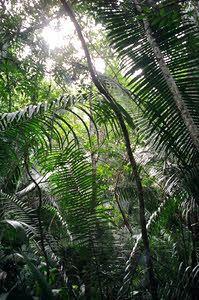 Belize Jungle - photo by Meg Pier