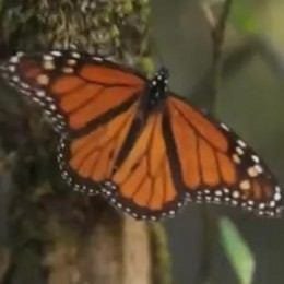 Magical Monarch Migration in the State of Mexico